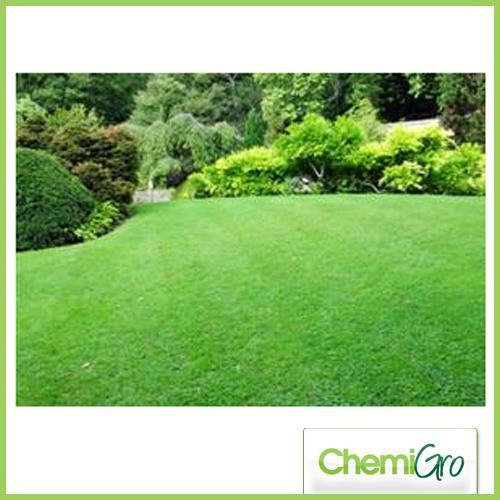 Greensward low maintenance lawns for Best low maintenance grass